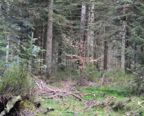 Lehrrevier Nördlicher Schwarzwald